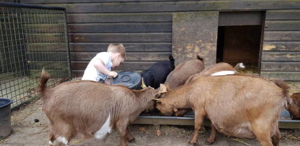 Vrijwilliger gezocht om onze dieren te voeren.